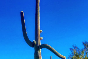 Travel Tips – Tuscon